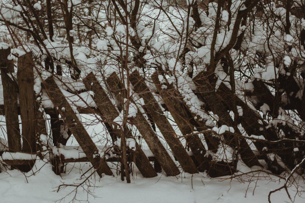 czerwona paproć blog ogrodniczy podlasie puszcza knyszyńska